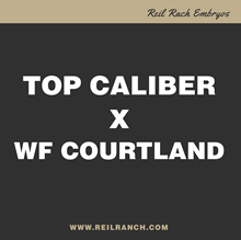 Top Caliber x WF Courtland